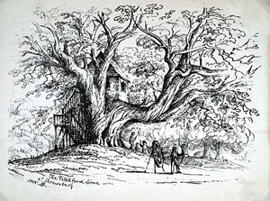 Tree House at Pitchford Hall, 1855,
